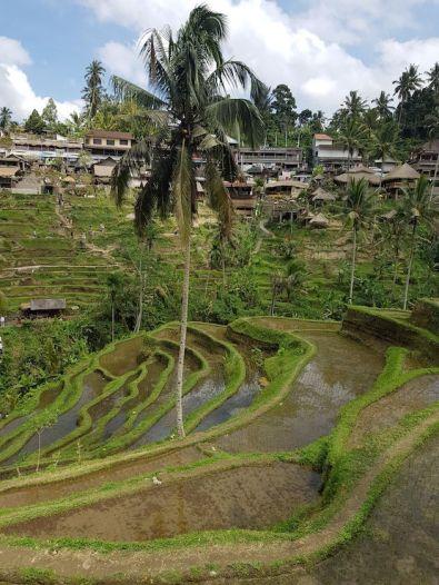 Terrazas Telallang
