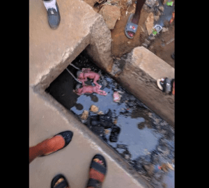 Twins dumped in a drainage