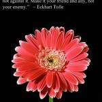 Quote of the Week: Eckhart Tolle