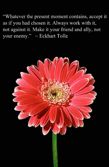 Gerbera Daisy with quote