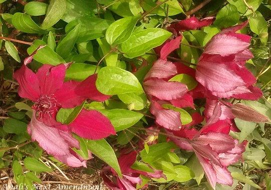 petals blowing in breeze