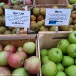 Apples 2 Apples: Spencer + Mutsu