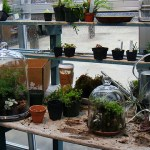 Boston's Latest Crafty Girl Craze: Terrariums
