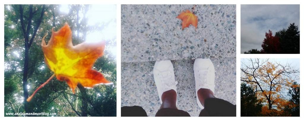 October falling leaves
