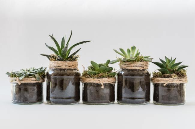 Image of small potted plants. Saturdays in the park will have a plant swap.
