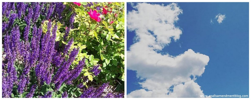 Flowers and blue sky represent a day in June, Juneteenth