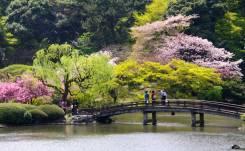 El Jardín Nacional Shinjuku Gyoen alberga más de 800 especies de plantas agrupadas en tres estilos de jardines: un jardín clásico a la francesa, un jardín a la inglesa y un jardín tradicional japonés, en el que destaca su jardín de cerezos, con una colección formada por 75 variedades distintas/ Foto: Turismo de Japón