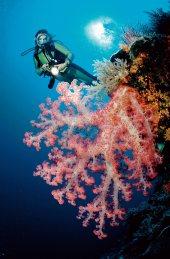 El mar de Andamán alberga un mundo submarino sorprendente que parece concentrarse en el archipiélago de las Similan. El nombre tailandés significa «nueve islas», pero para ver sus tesoros naturales basta con visitar cuatro: Similan y Ba-ngu, que tienen arrecifes de coral de formas sorprendentes; Huyong, en cuya larga playa desovan las tortugas; y Miang, donde está la oficina del P. N. Mu Koh Similan/ Foto: Reinhard Dirscherl - Age Fotostock