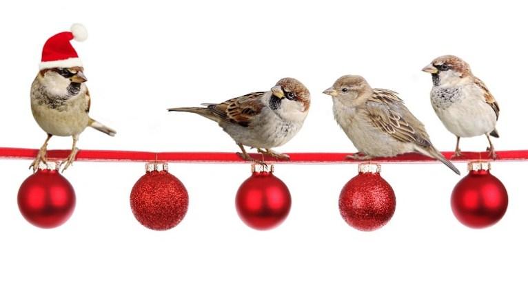 Recibir la Navidad-Foto Pixabay