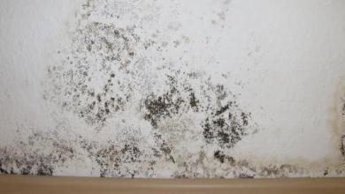 Photo of كيفية التخلص من العفن على الجدران