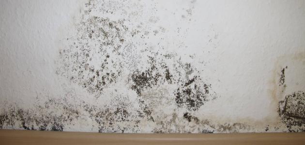 كيفية التخلص من العفن على الجدران