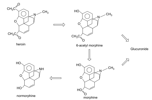 Structure of diamorphine (heroin) and its major metabolites.
