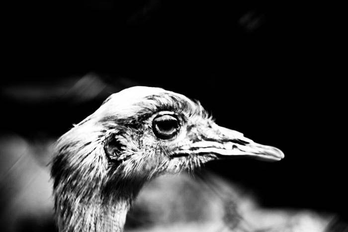 birds_02