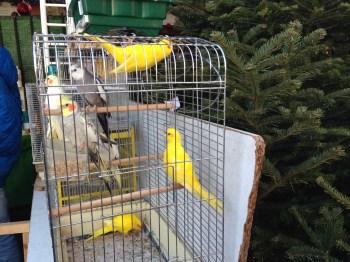 Pássaros no mercado...