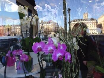 ... e orquídeas numa vitrine!