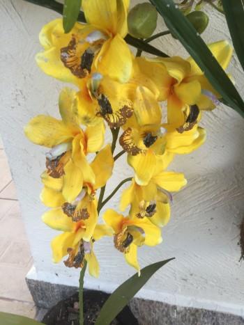 Orquídeas no hotel (adoro, e tinha uma variedade grande!)