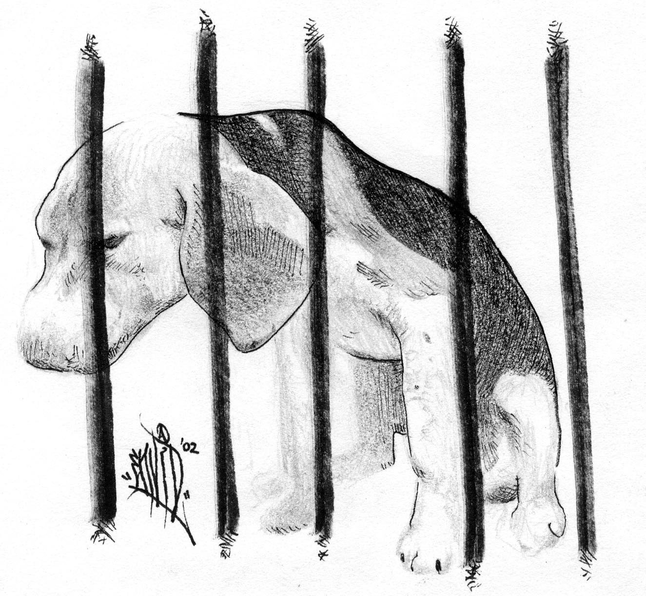 Dogs are a Common Test Subject in Animal Experimentation