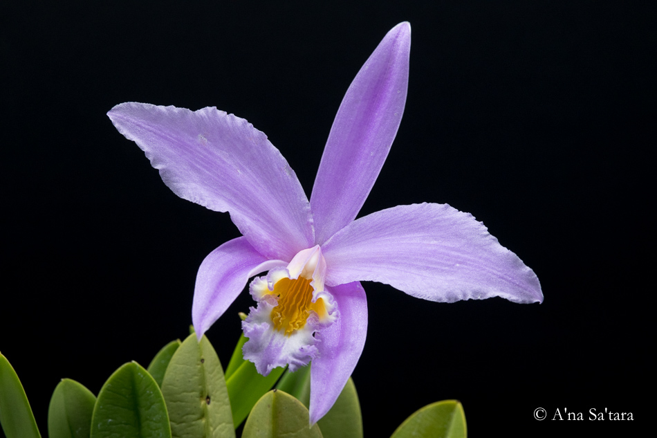 Orchid photography reality shift