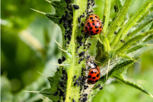 pests on a plant