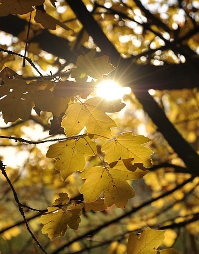 Herbst im Klettgauland 2009