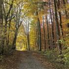 Herbststimmung im Klettgau Anfang November