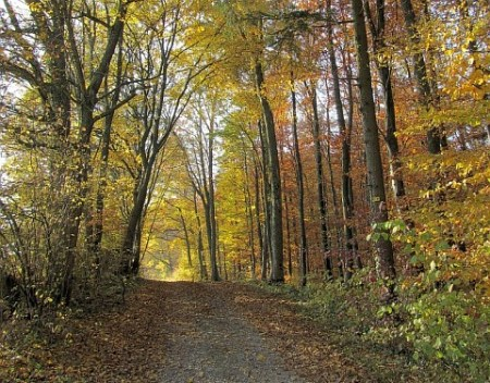 Herbst im Blätter Wald nahe dem Dreitälerblick in Richtung Tiengen