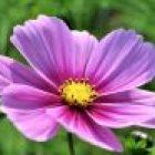 Das Niarts-Blumenprogramm 2015