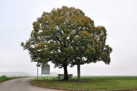 Trister Hochnebel liefert nicht viel erfreuliches an Motiven: Alles versumpft im Grau, selbst das Herbstlaub... (Foto: Martin Dühning)
