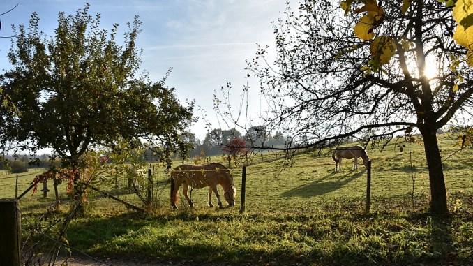 Die umgebende Landschaft bietet sehr pastoral anmutende Ausblicke - sogar im November (Foto: Martin Dühning)
