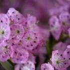 Kunterbunte Frühlingsblüten