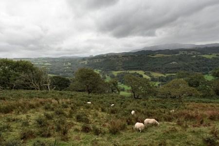 Schafe grasen auf den Höhen (Foto: Martin Dühning).