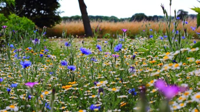 Mittsommerblüten (Foto: Freddie Ramm via Pexels)