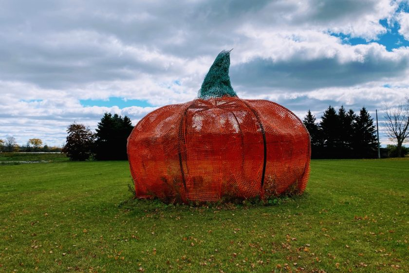 A Picture of Giant Road Side Pumpkin at Linton Family Farm In North Oshawa