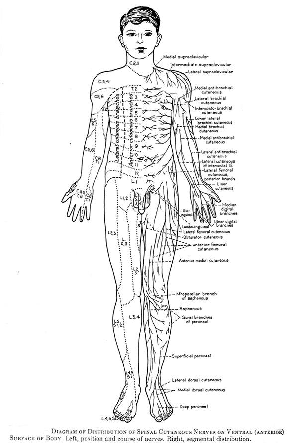 Human Anatomical Position Diagram