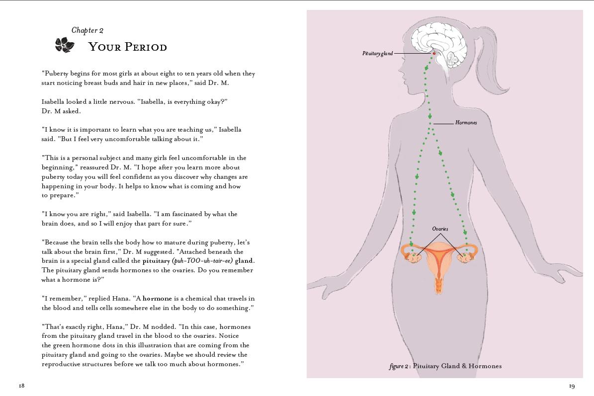 Puberty Anatomy Images