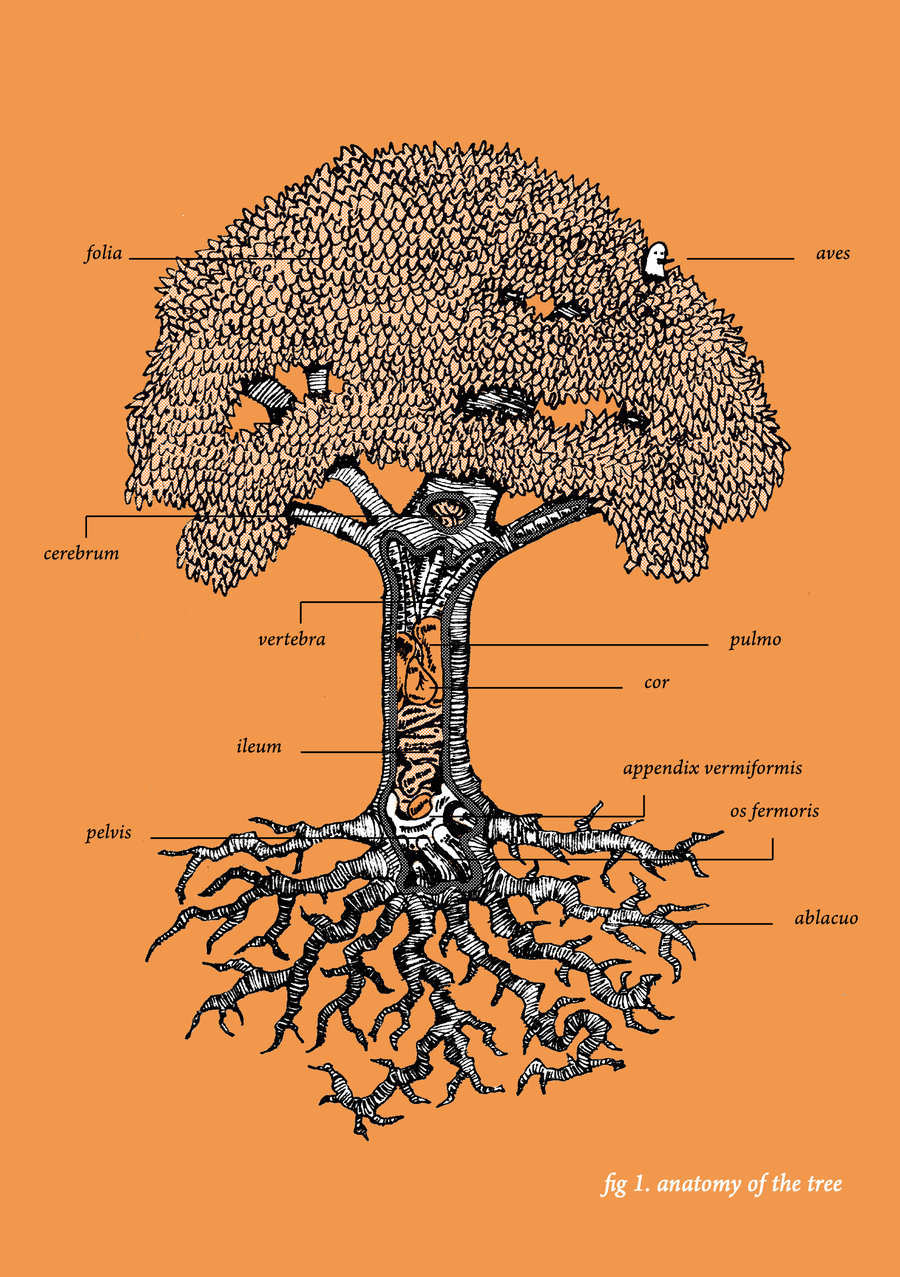 hight resolution of graphic tree diagram