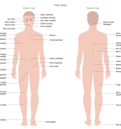male body anterior view posterior view body parts name diagram body parts diagram from back [ 1500 x 1222 Pixel ]