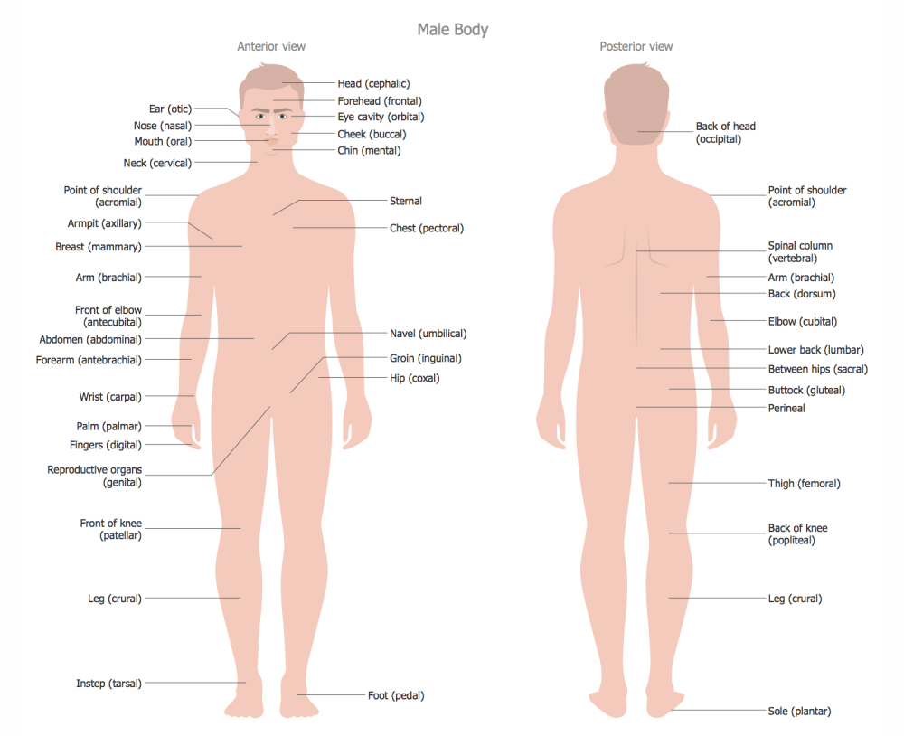 medium resolution of male body anterior view posterior view body parts name diagram body parts diagram from back