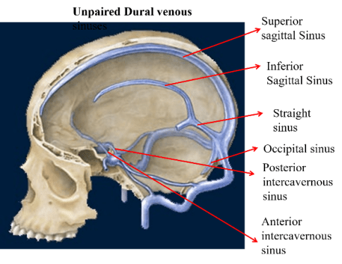 Dural Venous Sinuses -Paired and Unpaired Venous Sinuses -