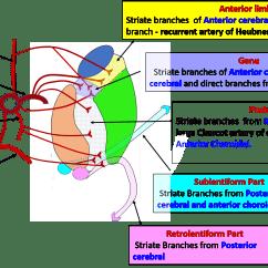 Antecubital Fossa Diagram Honda 250ex Wiring Median Cubital Related Keywords