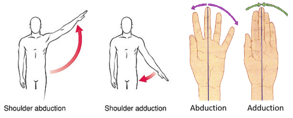 adduction and abduction