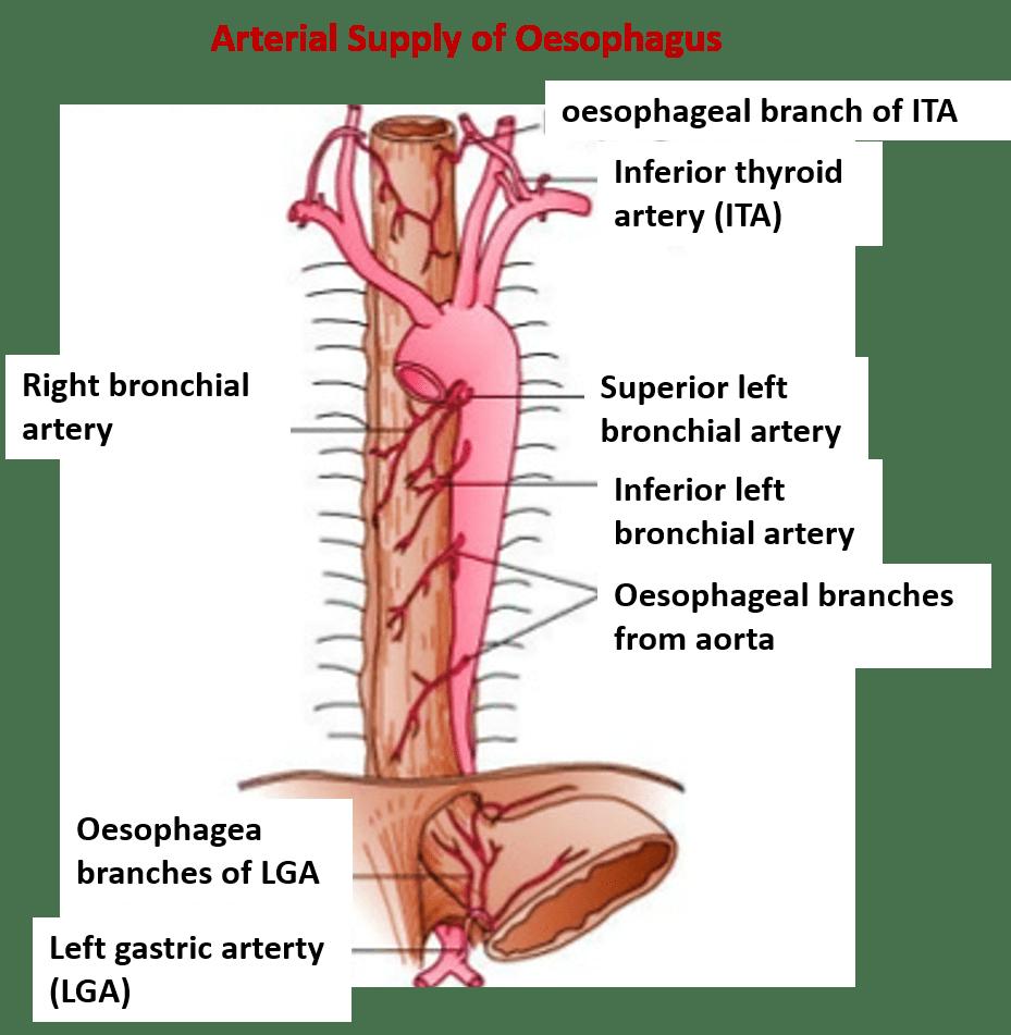 Fein Augenmodelle Für Anatomie Bilder - Anatomie Ideen - finotti.info
