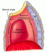 location of heart in middle mediastinum