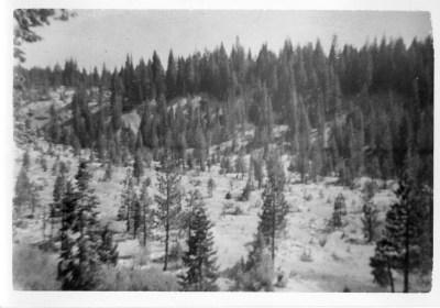 La Port, CA 1946 G'ma Van's back yard