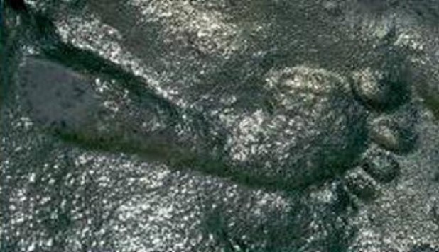 290 million year old footprint Ancient Code