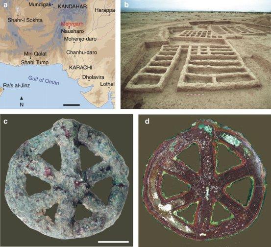 (A) Mapa indicando os principais sítios arqueológicos Indo-iranianos datadas do sétimo para o segundo milênio aC.  barra de escala, 200 km.  (B) Vista do sítio arqueológico de MR2 em Mehrgarh (setor X, Early Calcolítico, o final do período III, 4,500-3,600 BC).  (C) vista do lado da frente do amuleto em forma de roda.  barra de escala, 5 mm.  (D) imagem de campo escuro da secção equatorial do amuleto.