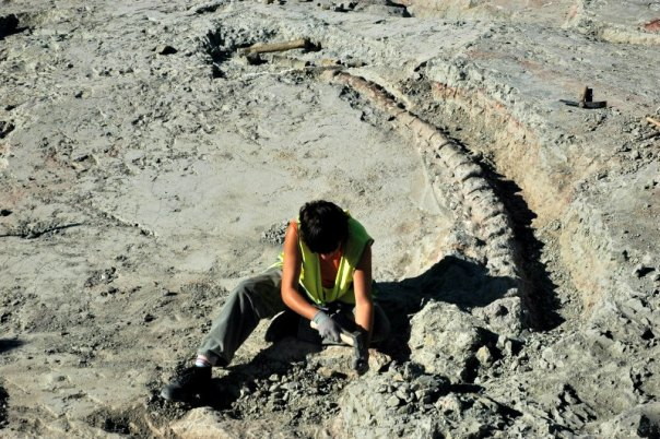 Los científicos escépticos opinan que, siguiendo una lógica diluviana, los restos animales de especies anteriores a la gran inundación (incluyendo los extintos dinosaurios) deberían hallarse en un solo estrato, sin distinción alguna. En la imagen, excavaciones de la cola de un dinosaurio en el yacimiento de Lo Hueco, Cuenca, España. (Fotografía: UNED/FLYCKR)