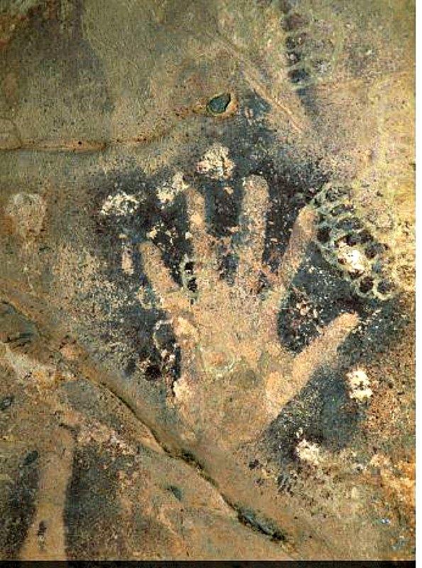 Las marcas de la derecha son rastros de antiguos nidos de avispas. (Fotografía: La Gran Época/TARA)