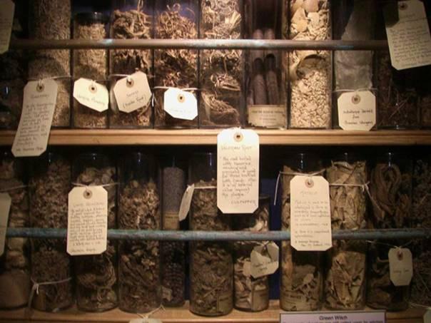 Diversas hierbas y otros ingredientes vegetales que la sabiduría popular prescribía para la preparación de pociones mágicas y pócimas curativas. (CC0)