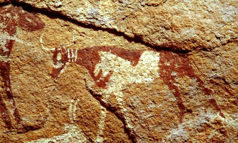 Pintura rupestre de una vaca con un supuesto collar triple, Wadi al Firaq, Egipto. (Fotografía: La Gran Época/TARA)